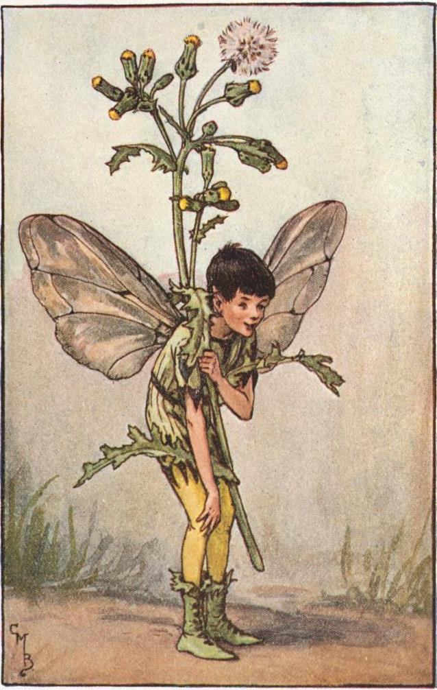 Groundsel flower fairies
