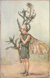 Shepherd's purse flower fairy